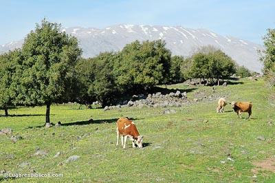 Los toros de Basán